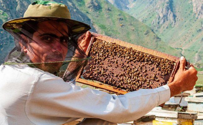 beekeeper holding up a beecube