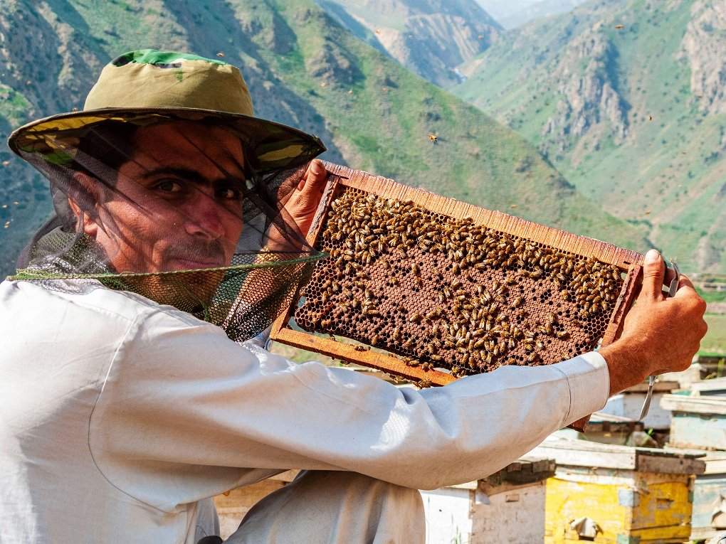 Beekeeper producing honey in the traditional way beside the dusty road up to Babusar Pass